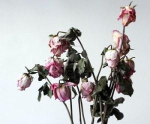 17162430-fiori-appassiti-secchi-avvizziti-l-39-ambiente-bianco