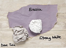 brassica-trends